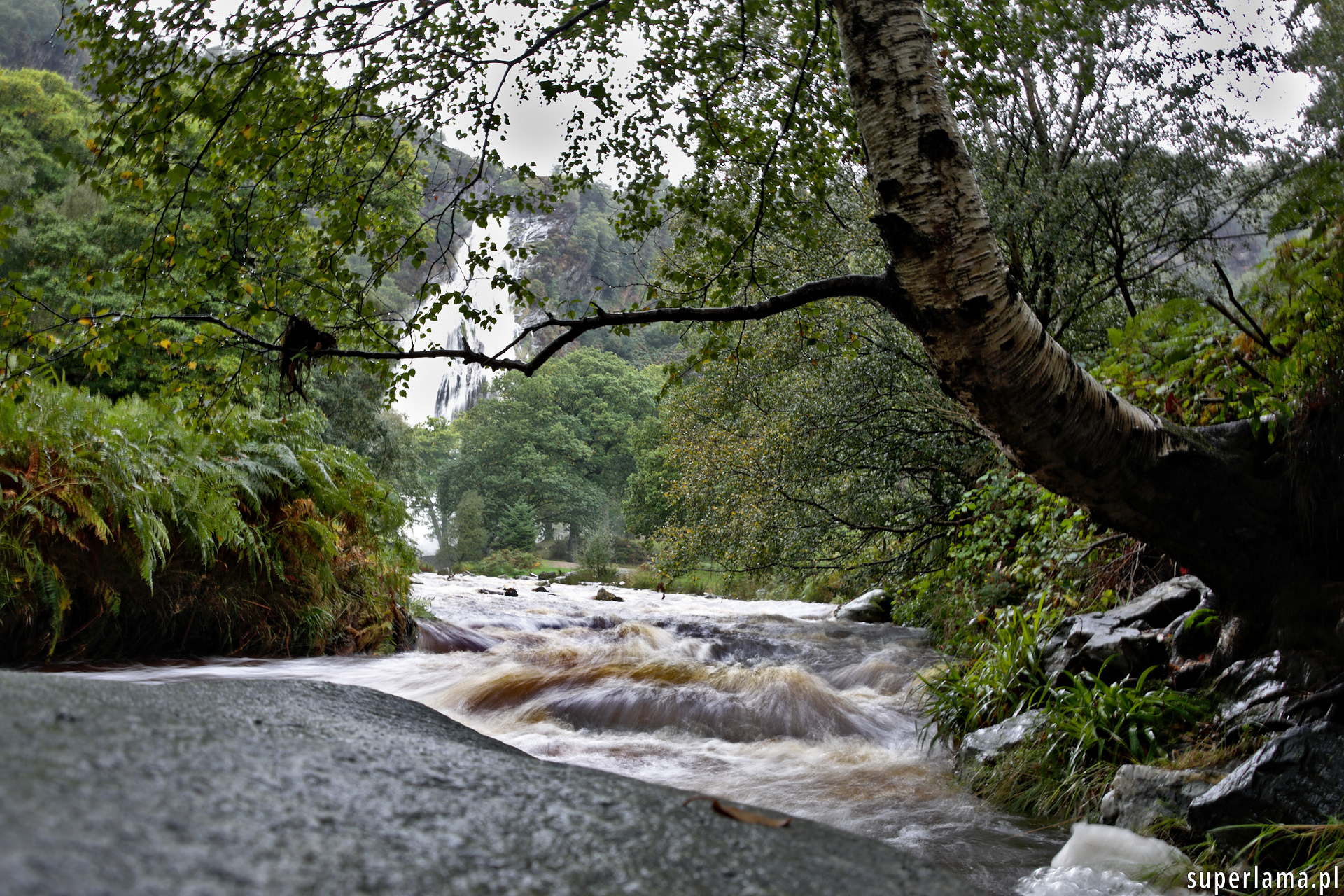 Dargle River, Powerscourt