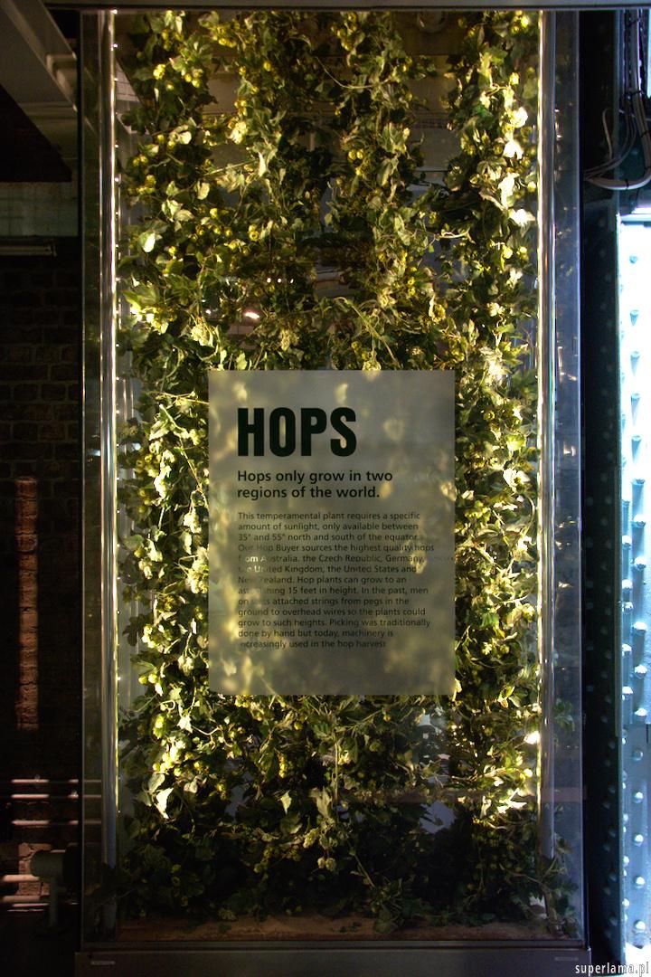 guinness - chmiel - hops
