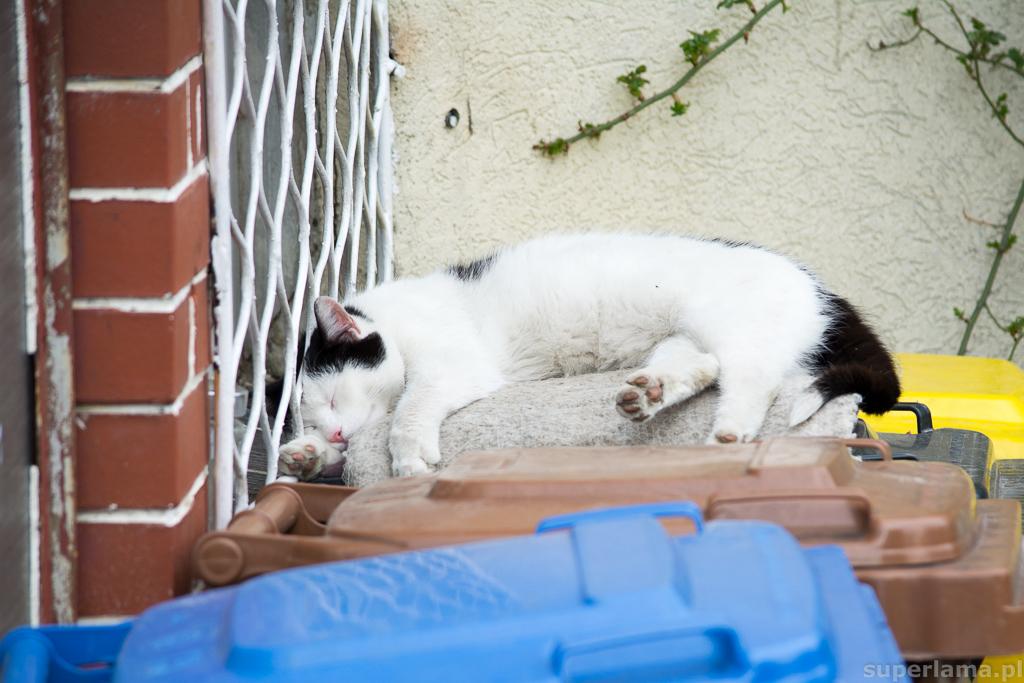 kot na śmietniku