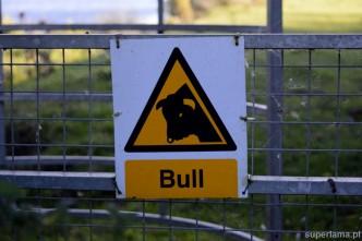Achtung bull