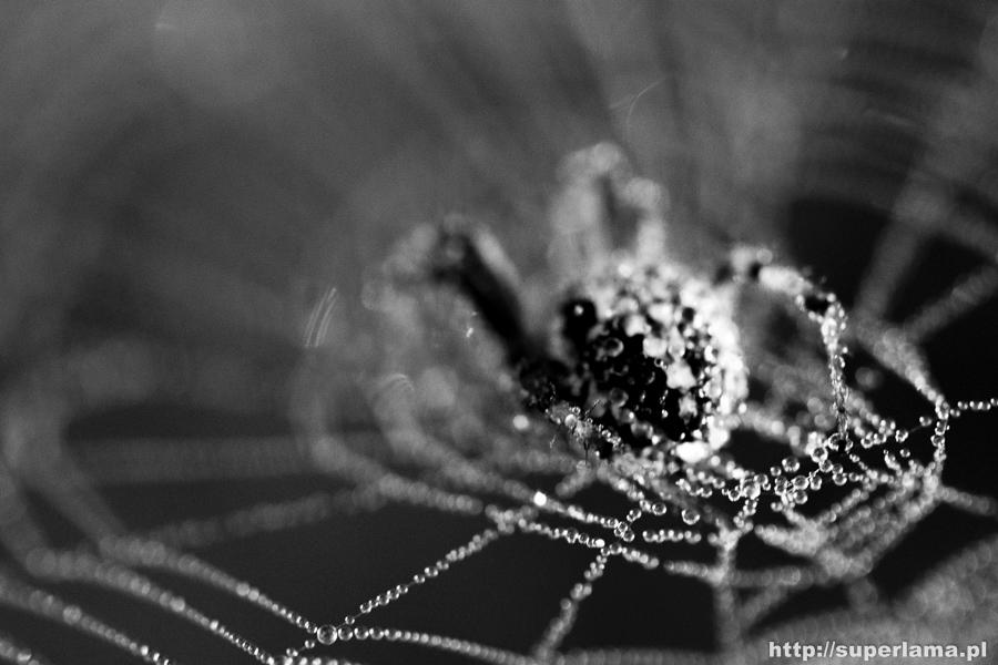 makro-fotografia-przyrody-d7100-superlama-17-5
