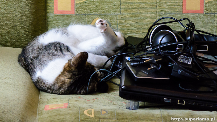cat-kaspersky-guardian-av-1